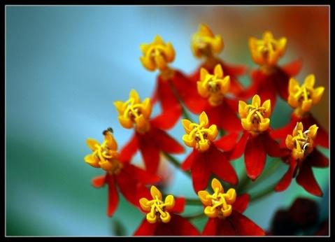 network-flower